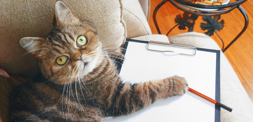SEO quotes for business with a cat