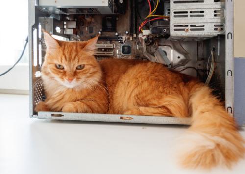 Cat in a computer